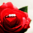 Diamond in a red rose — Stock Photo