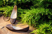 Comfortable ballet shoes, snakeskin, ladies shoes in nature — Stock Photo