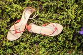 Italian shoes, stylish sandals lie on the grass — Stock Photo