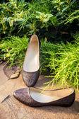 Snakeskin ballet flats, women's shoes on a rock — Stok fotoğraf