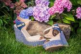 Italian shoes, elegant sandals in the garden — 图库照片