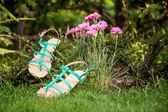 Sandals hanging on a bush, women's shoes — Stock fotografie