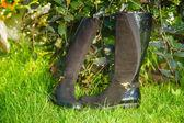 Semišové boty ženy leží na trávě — Stock fotografie