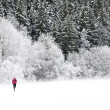 A jogger running through a beautiful snow covered forest. - Stock Photo