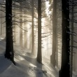 Rays in winter forest — Stock Photo