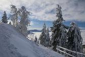 Snowy trees — Foto de Stock