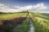 Tuscany (Italy) — Stock Photo