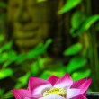 Floating lotuses in Cambodia — Stock Photo