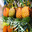 Постер, плакат: Ripe honey pineapples in Java Indonesia