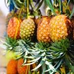 ������, ������: Ripe honey pineapples in Java Indonesia