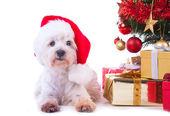 Cão de natal — Foto Stock