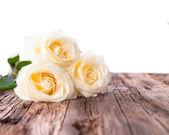 Bílá růže — Stock fotografie