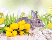 Easter rabbit — Foto de Stock
