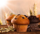 Muffins — Stockfoto