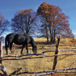 Autumn motif with horse — Stock Photo