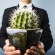 Businessman offering a cactus — Stock Photo