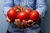 Uomo che tiene i pomodori sulla pianta — Foto Stock