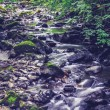 Water streaming through woodland — Stock Photo
