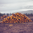 Stock Photo: Logs against gloomy sky