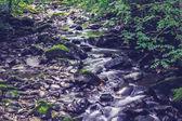 Eau en streaming à travers bois — Photo