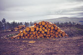 Logs against a gloomy sky — Stockfoto