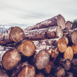 Logs against gloomy sky — Stock Photo #31720369