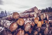 Logs against a gloomy sky — Stock Photo