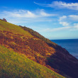 Hillside by the coast — Stock Photo