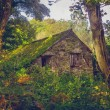 Abandoned cabin in the woods — Stock Photo
