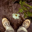 Person looking down at a flower — Stock Photo