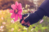 Hand in skeleton glove is violently grabbing flower with bee — Stock Photo