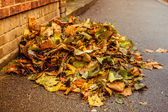 Pile of leaves on pavement — Stock Photo