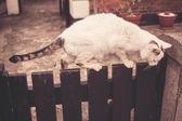 Big cat on fence — Foto de Stock