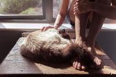 Kadın ve cam kenarında kedi — Stok fotoğraf