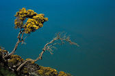 Gorse growing on cliffside — Stock Photo