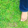 Stock Photo: Female feet on grass
