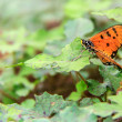 Butterfly sits on a green leaf — Stock Photo