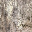 Texture of bark wood use as natural background  — Stock Photo