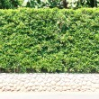 Stock Photo: Fence tree, shrubbery on stone base