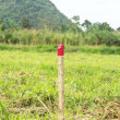Red colored wooden pole for the setting out of a Field survey — Stock Photo
