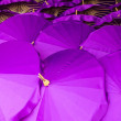 Thailand, Chiang Mai, hand painted Thai umbrellas drying in the — Stockfoto