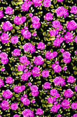 Fabric background, Fragment of colorful retro tapestry textile p — Stock Photo
