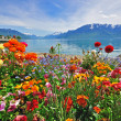 Flowers in swiss Alps — Stock Photo