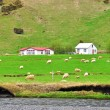Stock Photo: Rural landscape in Iceland