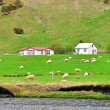 Rural landscape in Iceland — Stock Photo