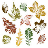 Collection of autumn leaves imprints — Stock Vector
