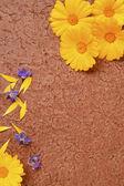 Marigold and borage — Stock Photo