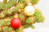 Christmas Ornaments on Spines — Stock Photo