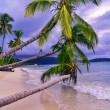 Palm trees over the white sand beach — 图库照片