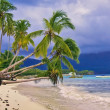 Palm trees over the white sand beach  — Stock Photo